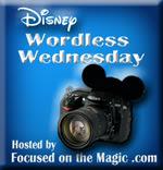 Focused on the Magic Wordless Wednesday